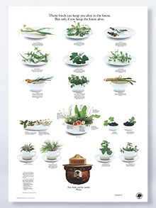 "Foods in the Forest Poster 8.5"" x 11"" (set of 200)"